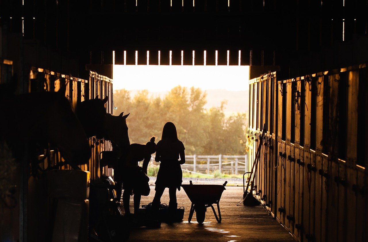early morning, equestrian, horse